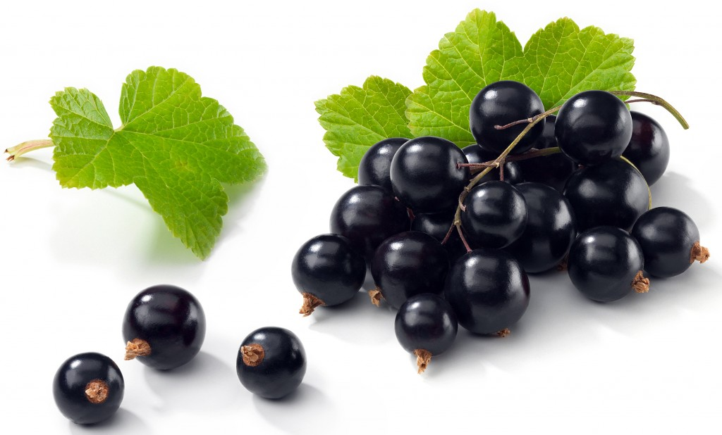 Black Currant wallpapers HD