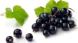 Black Currant Best Wallpaper