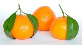 Citrus Wallpaper Background