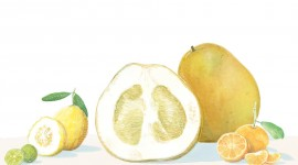 Citrus Wallpaper Download Free