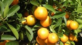 Citrus Wallpaper Full HD