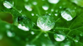 Dew Wallpaper Download Free