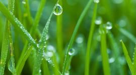 Dew Wallpaper For IPhone