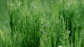 Dew Wallpaper High Definition