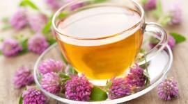 Flower Tea Photo Download