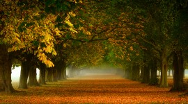 Golden Autumn High Quality Wallpaper