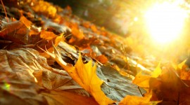 Golden Autumn Wallpaper Download