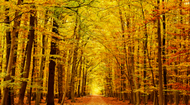 Golden Autumn Wallpaper Free