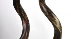 Horns Best Wallpaper