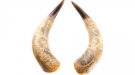 Horns Desktop Wallpaper HD