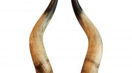 Horns Wallpaper