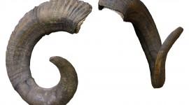Horns Wallpaper For PC