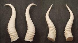 Horns Wallpaper Gallery