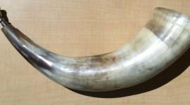 Horns Wallpaper HD