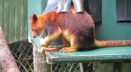 Kangaroo Goodfellow Wallpaper Download Free
