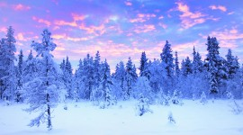 Lapland Wallpaper HQ