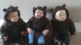 Little Bears Photo