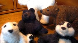 Little Bears Photo Download