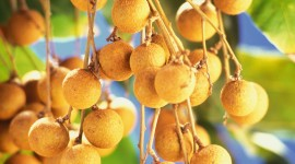 Longan Wallpaper For IPhone