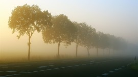 Misty Morning Photo