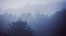Misty Morning Photo#1
