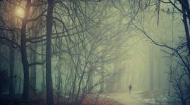 Misty Morning Wallpaper Gallery