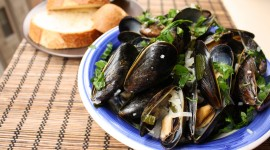 Mussels Photo Download