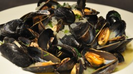 Mussels Photo Download#2