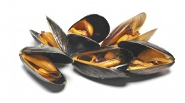 Mussels Photo Free#2