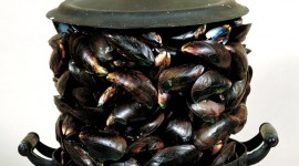 Mussels Wallpaper For Android