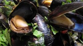 Mussels Wallpaper HQ