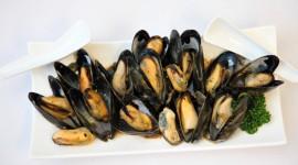 Mussels Wallpaper HQ#1