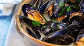 Mussels Wallpaper HQ#2