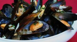Mussels Wallpaper HQ#3