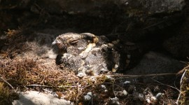 Nightjar Wallpaper Full HD