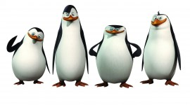 Penguins Madagascar Photo