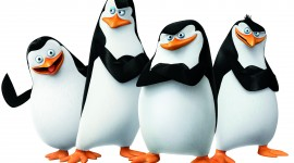 Penguins Madagascar Photo Free