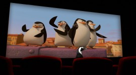 Penguins Madagascar Photo#1