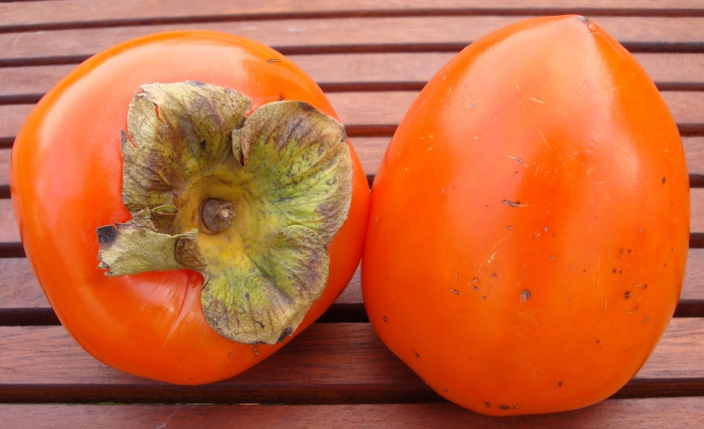 Persimmon wallpapers HD