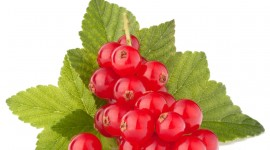 Red Currant Desktop Wallpaper For PC
