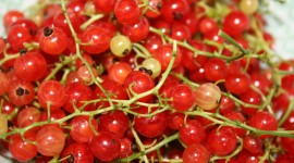 Red Currant Desktop Wallpaper HD