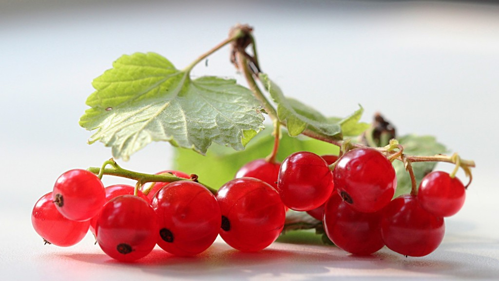 Red Currant wallpapers HD