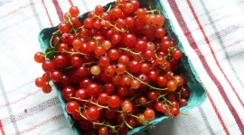 Red Currant Wallpaper For Desktop