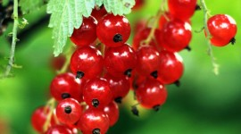 Red Currant Wallpaper For IPhone
