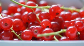 Red Currant Wallpaper Free