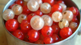 Red Currant Wallpaper Gallery