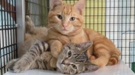 Shelter For Cats Best Wallpaper
