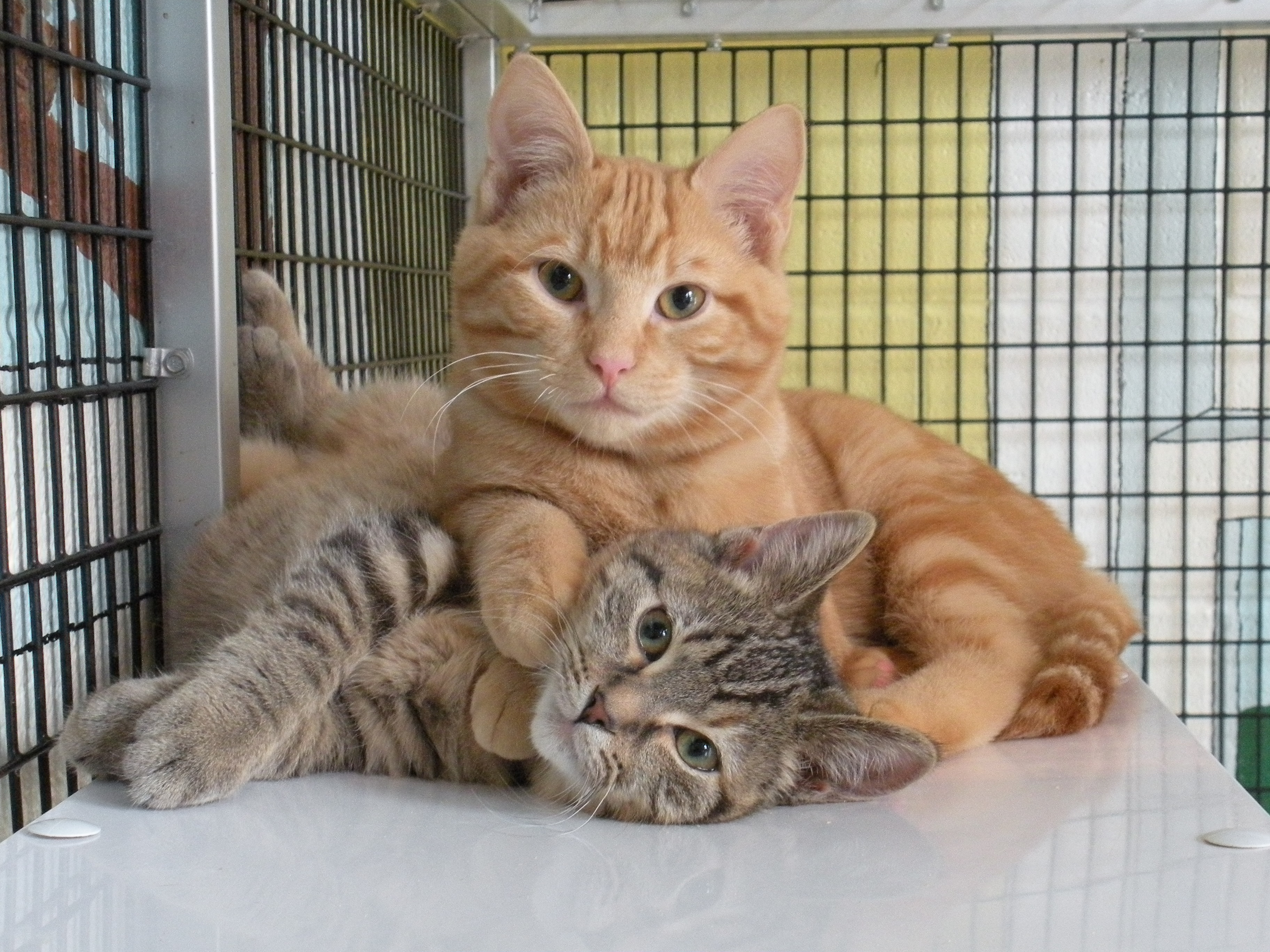 Shelter For Cats Wallpapers High Quality Download Free