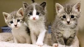 Shelter For Cats Desktop Wallpaper