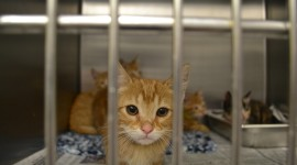 Shelter For Cats Wallpaper